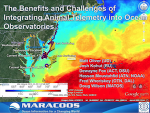 The Benefits and Challenges of Integrating Animal Telemetry into Ocean Observatories
