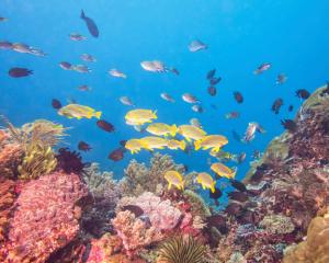 Marine Biodiversity Observation Network (MBON)