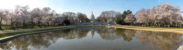 Capitol-in-spring-1