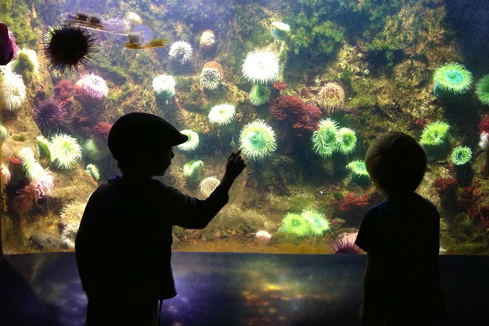 Two children in sillhouette in front of an aquarium exhibit of invertebrates