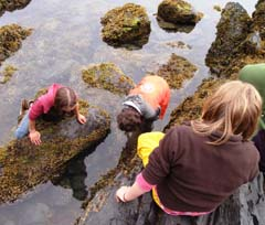 Students explore a rocky coastal area