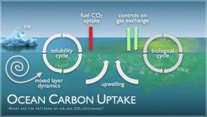 Carbon Uptake Cycle.  Credit:  NOAA/PMEL