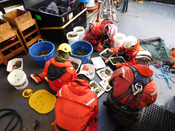 overhead shot of workers in a scrum sorting through trawl catch onboard ship